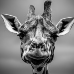 Giraffes: Up Close & Personal